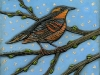 My Fettered Friends: Varied Thrush